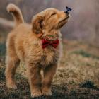 Doggy_Girls