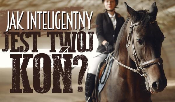 Jak inteligentny jest Twój koń?