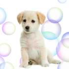 _.Bubbles._