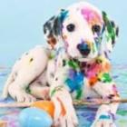 Sweet.Puppy