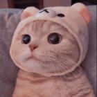 tylko_koty