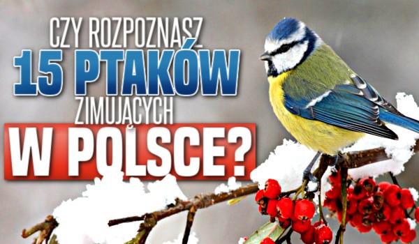 Czy rozpoznasz 15 ptaków zimujących w Polsce?