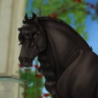 _Star_Stable_12