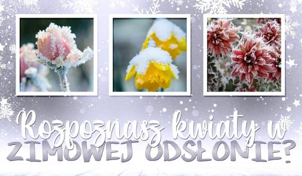 Rozpoznasz kwiaty w zimowej odsłonie?