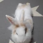 Koren_rabbits