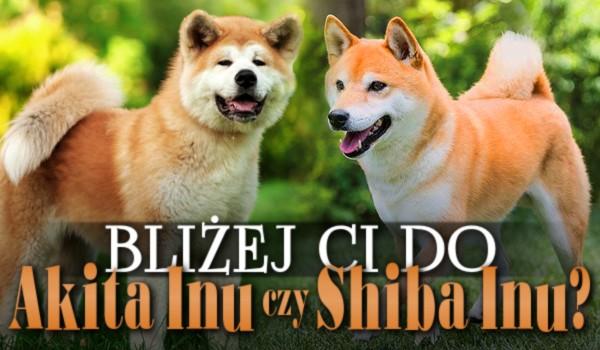 Bliżej Ci do Akita Inu czy Shiba Inu?
