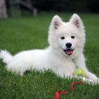 Dog.Love