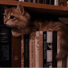 faircat
