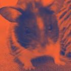 hamster000