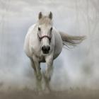 .Depresion.Horse.
