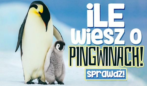 20 stycznia to Dzień Wiedzy o Pingwinach. Sprawdź, ile wiesz o tych zwierzętach!