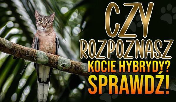 Czy rozpoznasz kocie hybrydy?