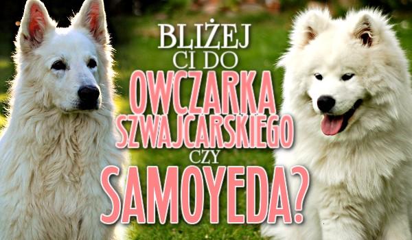 Bliżej Ci do Owczarka Szwajcarskiego czy Samoyed'a?