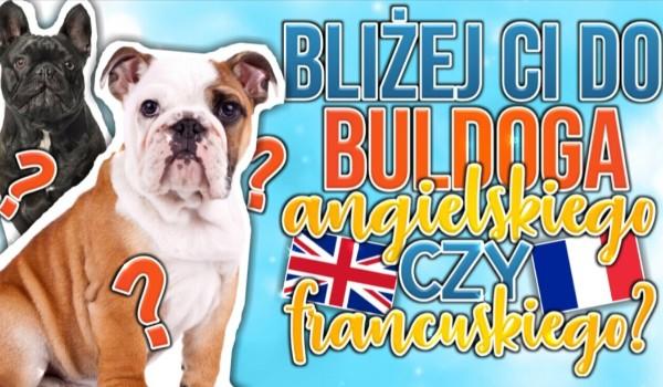 Bliżej Ci do Buldoga Angielskiego czy Francuskiego?