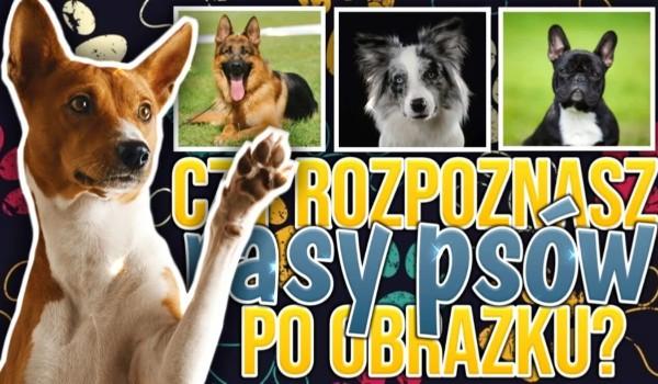 Czy rozpoznasz rasy psów po obrazku?