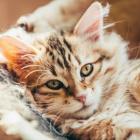 Cat_Quiz
