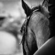 Luna.Horse