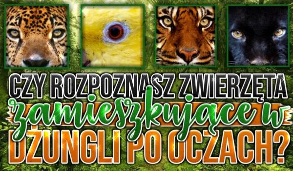 Czy rozpoznasz zwierzęta zamieszkujące w dżungli po oczach?