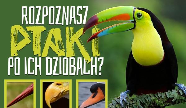 Czy rozpoznasz ptaki po ich dziobach?
