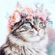 unicorn_kitty_01