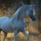 Horse.girl33