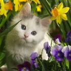 sweet.catlover