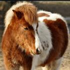 Magic.Horse