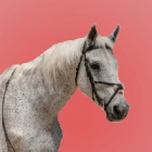 Horsess_my_life