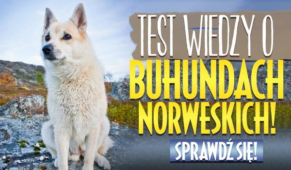 Test wiedzy o Buhundach Norweskich!