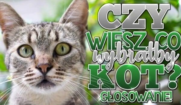 Czy wiesz, co wybrałby Twój kot? – głosowanie!