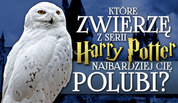 """Które zwierzę z serii """"Harry Potter"""" najbardziej Cię polubi?"""