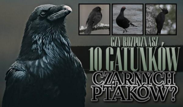 Czy rozpoznasz 10 gatunków czarnych ptaków?