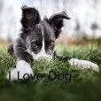 .I_Love_Dog.
