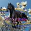 .Melody.Horse.