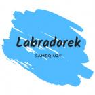 Labradorek1