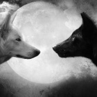 Moonfriend