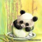 Panda_Rysuje