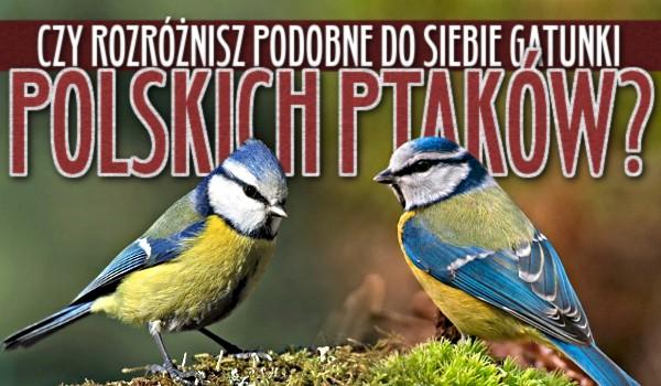 Czy rozróżnisz podobne do siebie gatunki polskich ptaków?