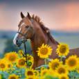 .Chestnut.horse.