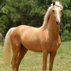 horses_lady