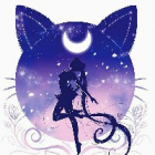 -Night_Fox-