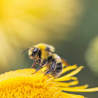 Queen__Bee