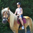 Aga_horse