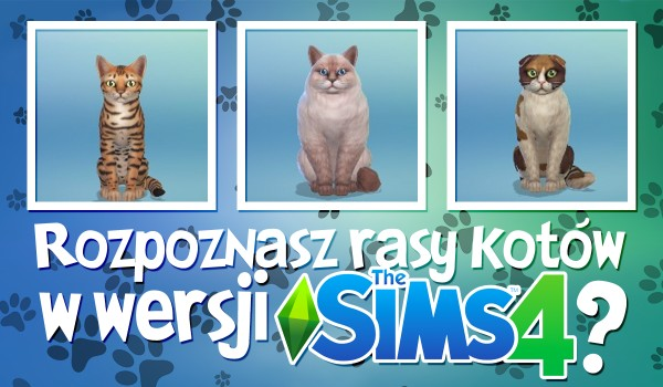 Czy rozpoznasz rasy kotów wersji The Sims 4?