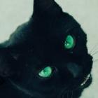 Slytherin.Cat