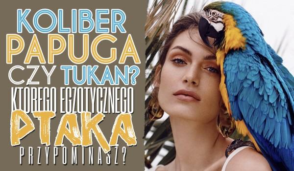 Koliber, papuga czy tukan? Którego z tych egzotycznych ptaków przypominasz?