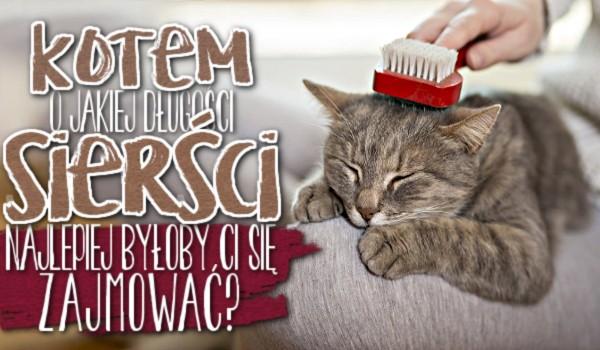 Kotem o jakiej długości sierści najlepiej byłoby Ci się zajmować?