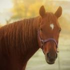 WIA_Horses