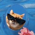 Aesthetic.cat