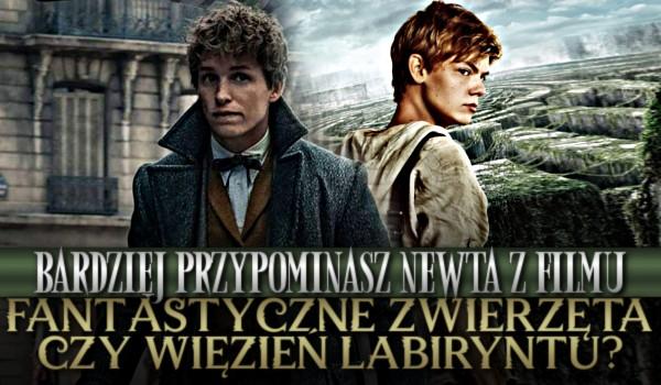 """Bardziej przypominasz Newta z filmu """"Fantastyczne Zwierzęta"""" czy """"Więzień Labiryntu""""?"""
